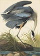 "poster for John James Audubon ""Aviary : Parts Unknown"""