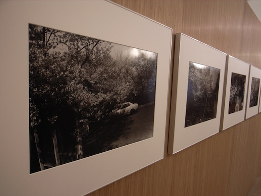 Daido Moriyama's B&W cherry blossoms photos at Ring Cube gallery.
