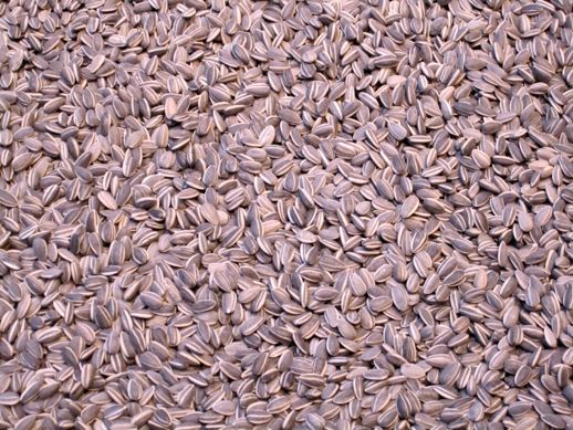 Ai Wei Wei sunflower seeds, detail
